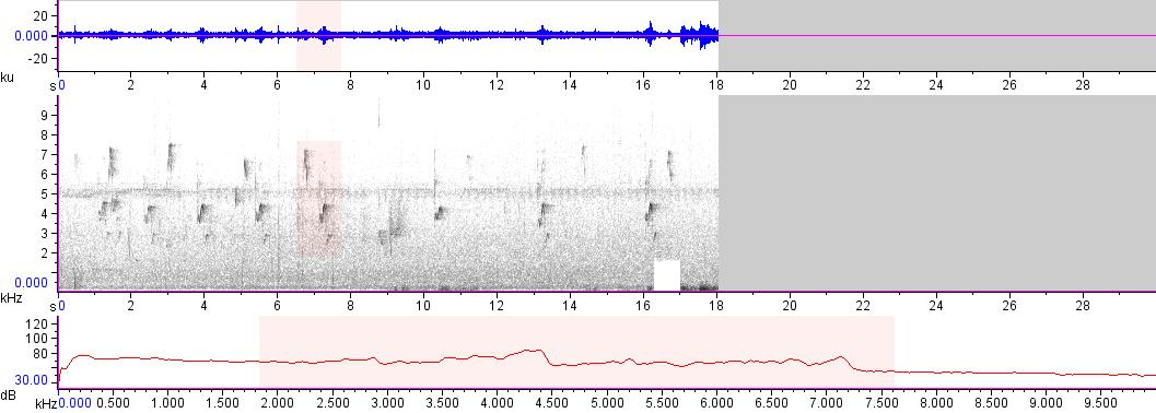 Sonogram of recording #AV 16452