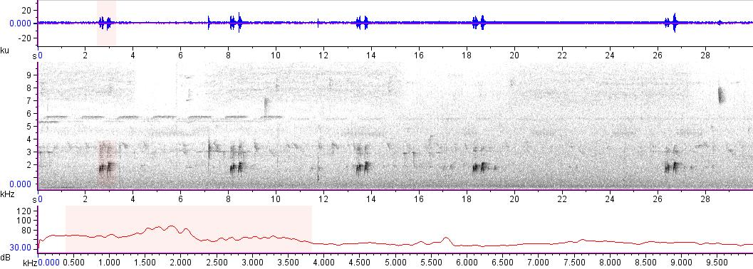 Sonogram of recording #AV 16462