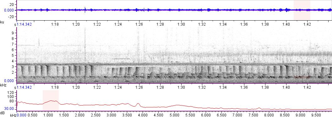 Sonogram of recording #AV 16466