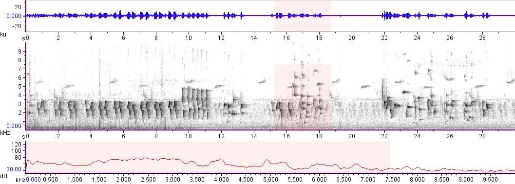 Sonogram of recording #AV 16469