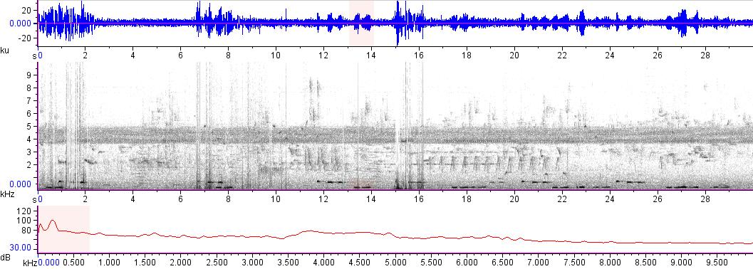 Sonogram of recording #AV 16476