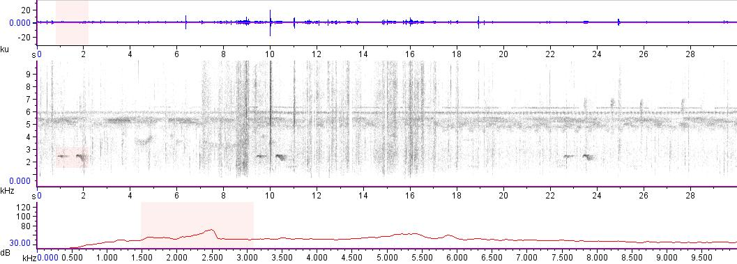 Sonogram of recording #AV 16485