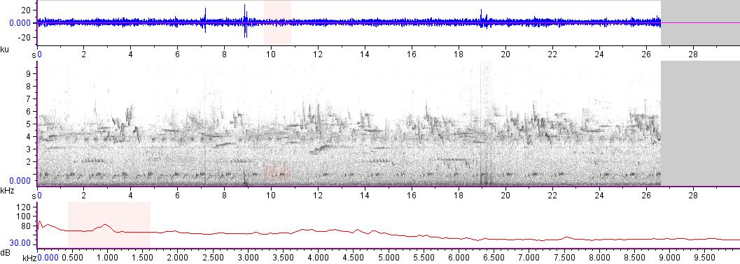 Sonogram of recording #AV 16495