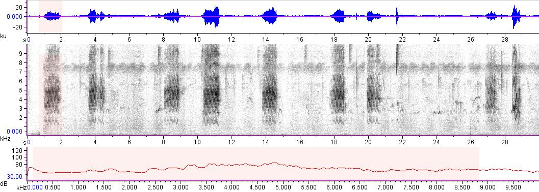 Sonogram of recording #AV 16520