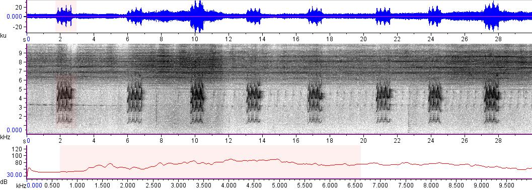 Sonogram of recording #AV 16542