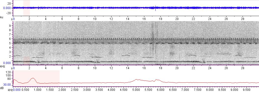 Sonogram of recording #AV 16555