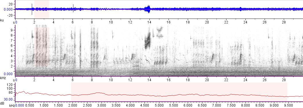 Sonogram of recording #AV 16579