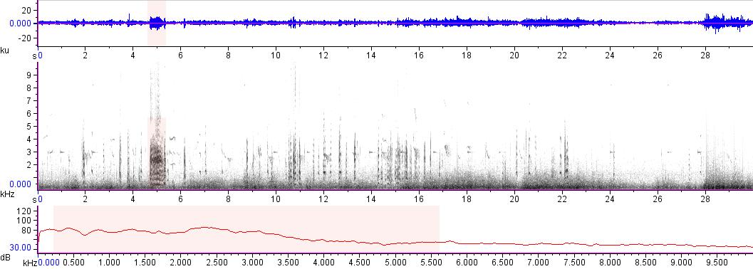Sonogram of recording #AV 16589