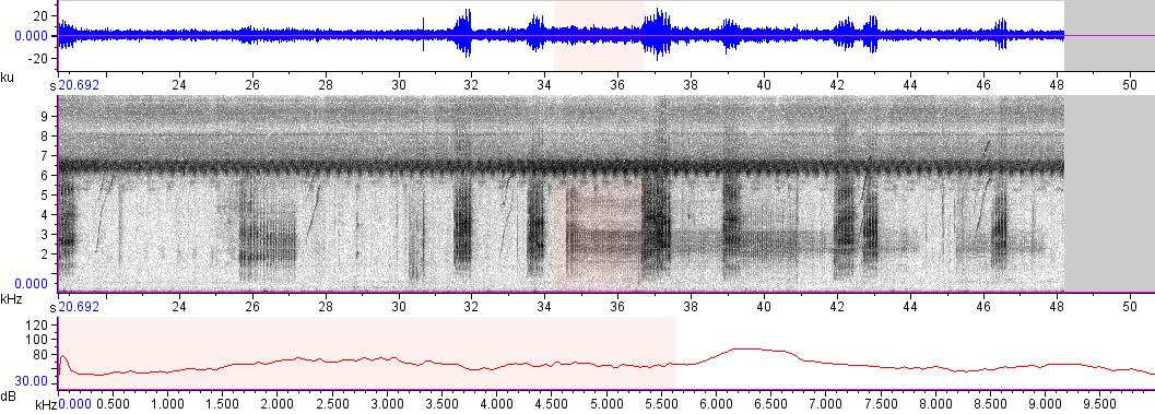 Sonogram of recording #AV 16599