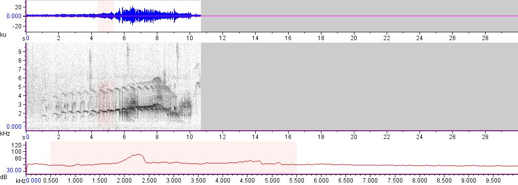 Sonogram of recording #AV 16605