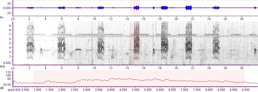 Sonogram of recording #AV 16609