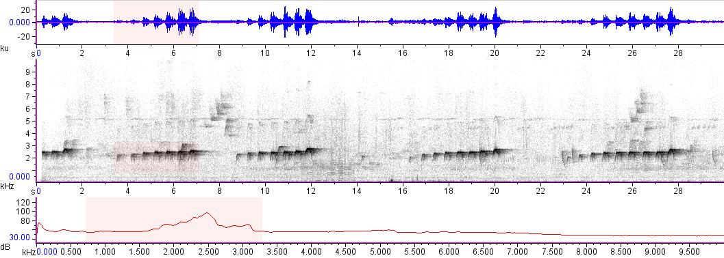 Sonogram of recording #AV 16615