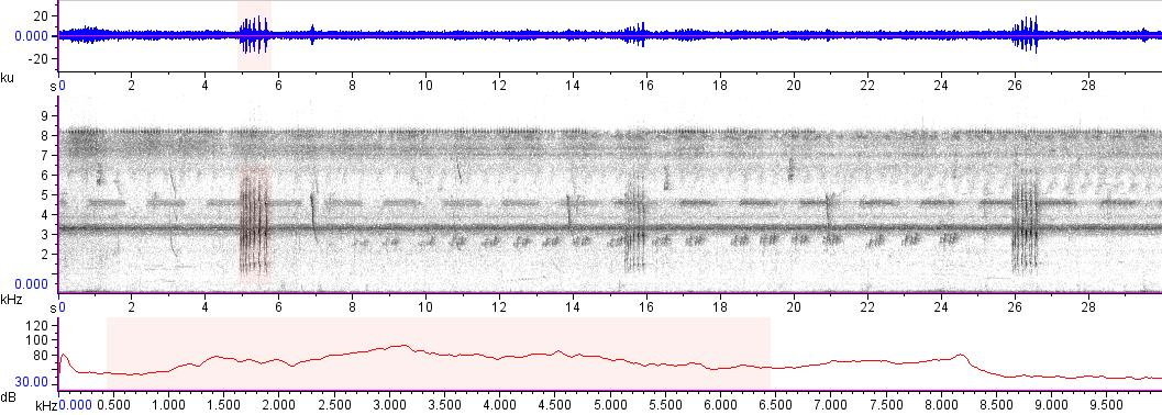 Sonogram of recording #AV 16638