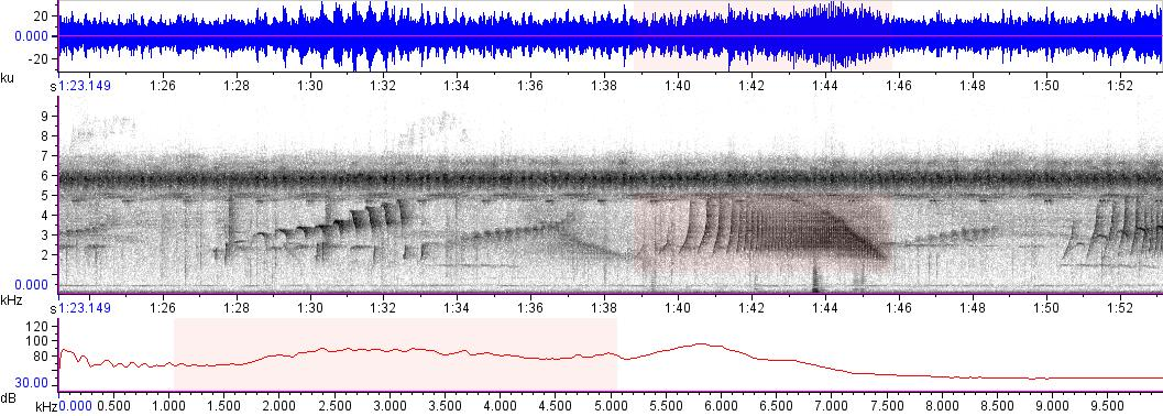 Sonogram of recording #AV 16639