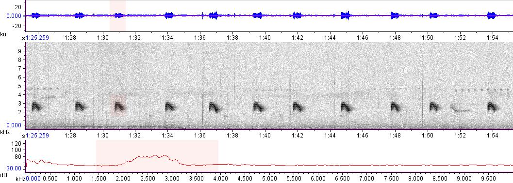 Sonogram of recording #AV 16656