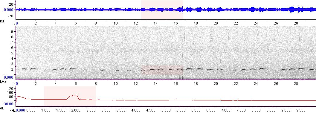 Sonogram of recording #AV 16679