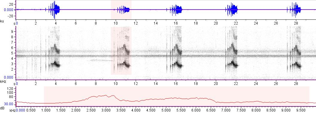 Sonogram of recording #AV 16698