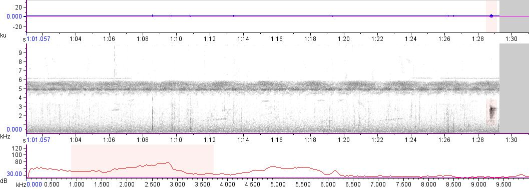 Sonogram of recording #AV 16727