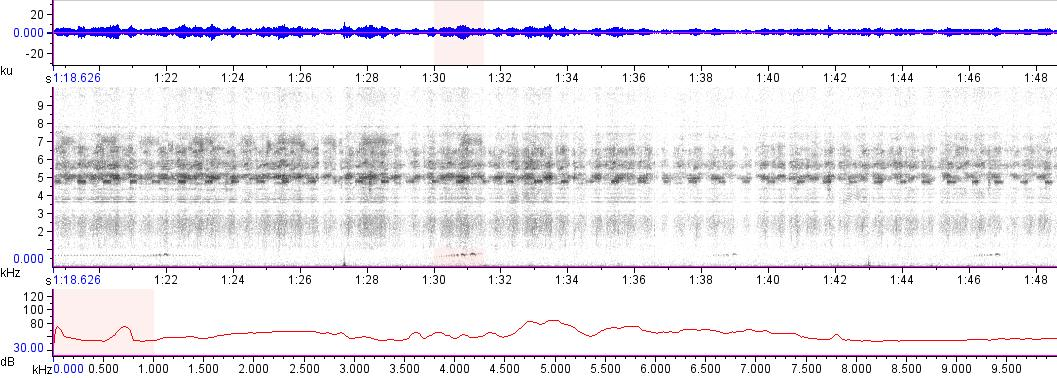 Sonogram of recording #AV 16753