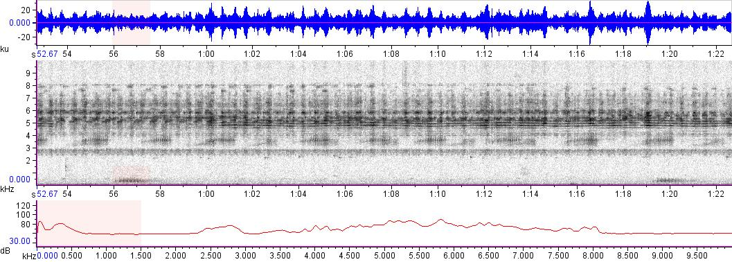 Sonogram of recording #AV 16754
