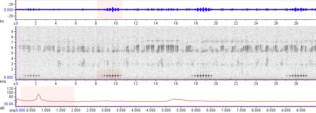 Sonogram of recording #AV 16756