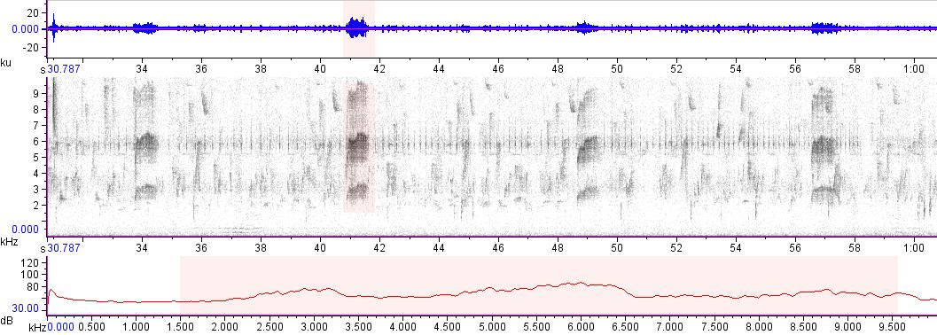 Sonogram of recording #AV 16762