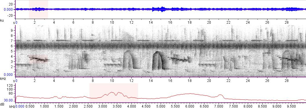 Sonogram of recording #AV 16768