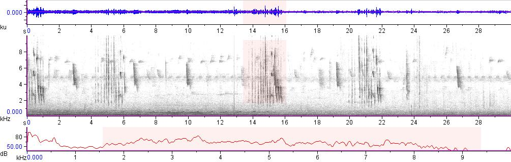 Sonogram of recording #AV 16770