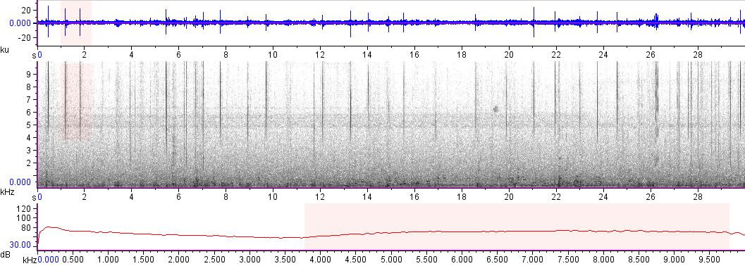 Sonogram of recording #AV 16797