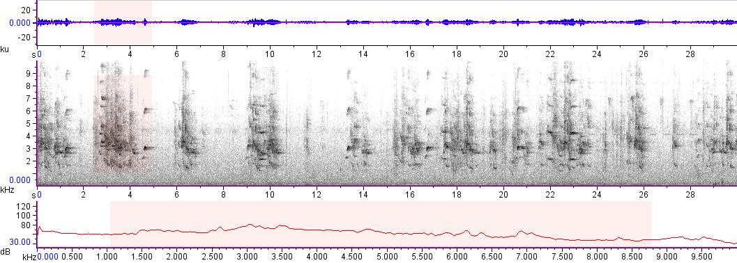 Sonogram of recording #AV 16878