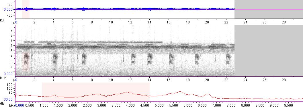 Sonogram of recording #AV 16881