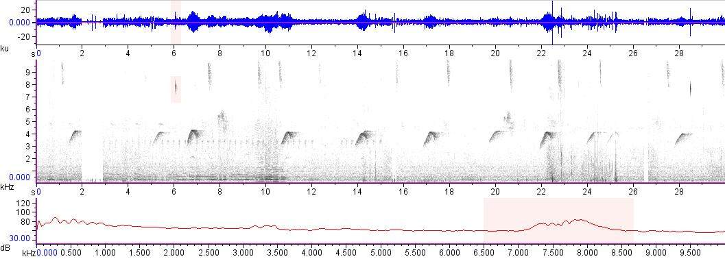 Sonogram of recording #AV 16926