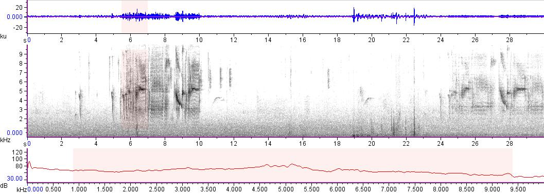 Sonogram of recording #AV 16961