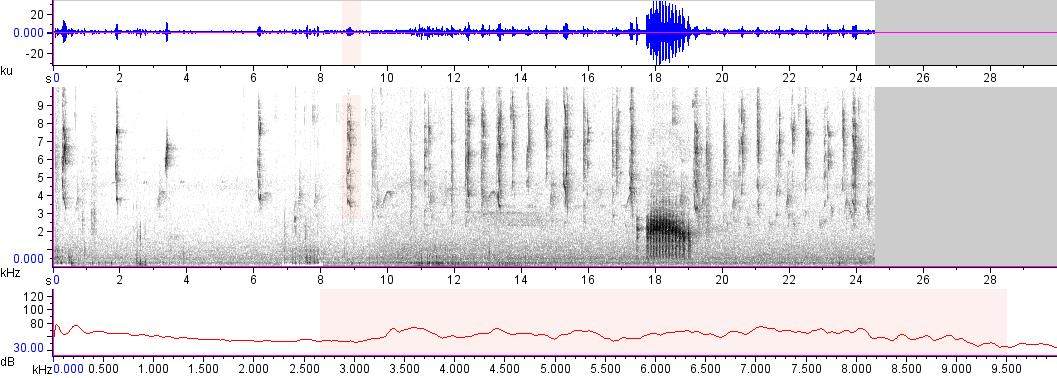 Sonogram of recording #AV 17020