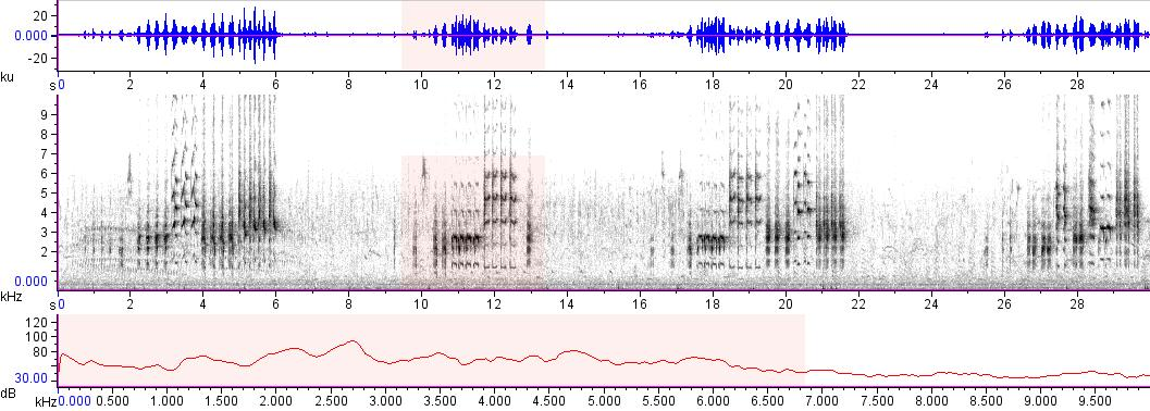 Sonogram of recording #AV 17030