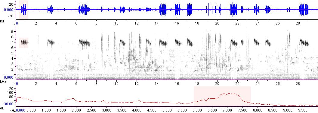 Sonogram of recording #AV 17032