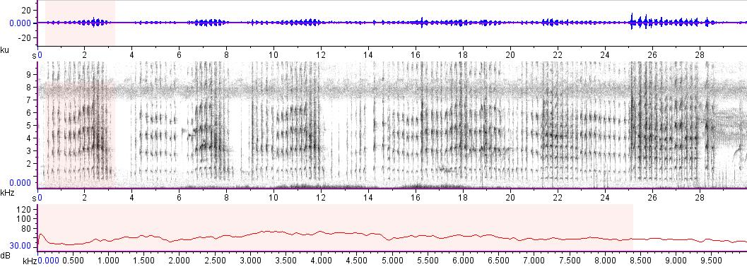 Sonogram of recording #AV 17039