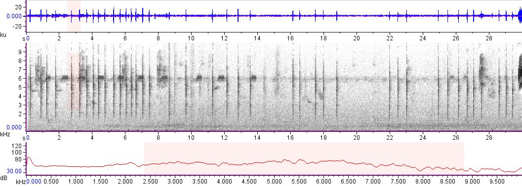 Sonogram of recording #AV 17047