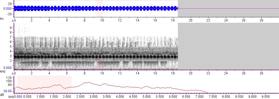 Sonogram of recording #AV 17054