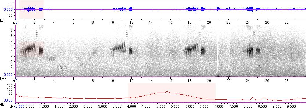 Sonogram of recording #AV 17068