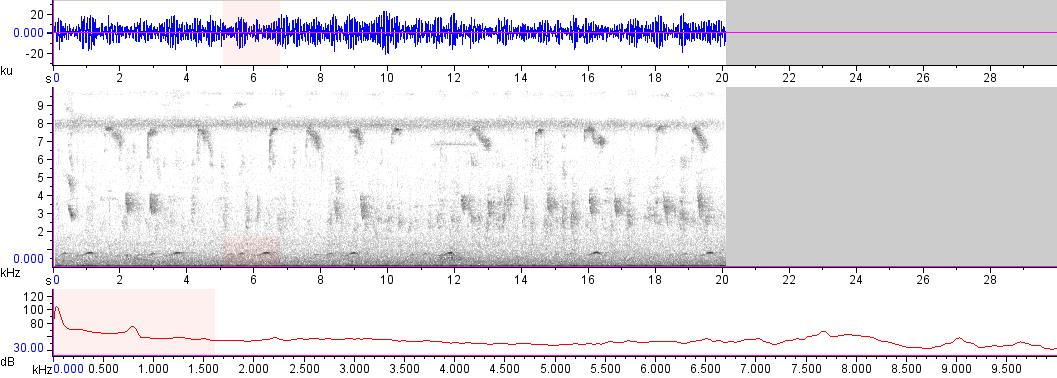 Sonogram of recording #AV 17085