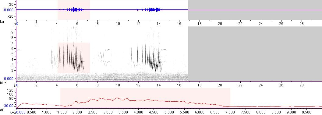 Sonogram of recording #AV 17153