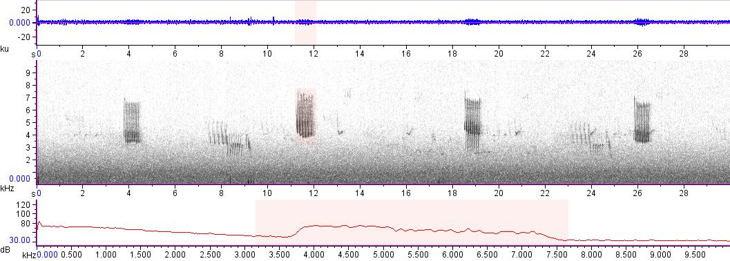 Sonogram of recording #AV 17178