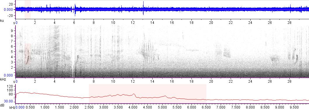 Sonogram of recording #AV 17180
