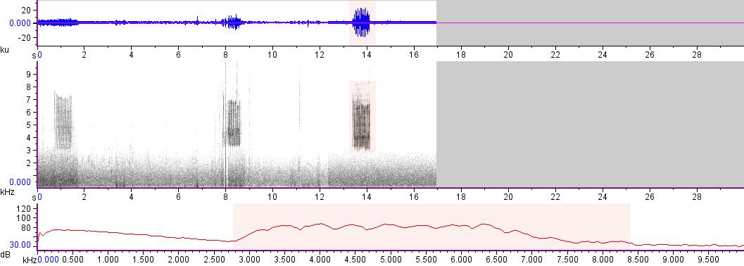 Sonogram of recording #AV 17181