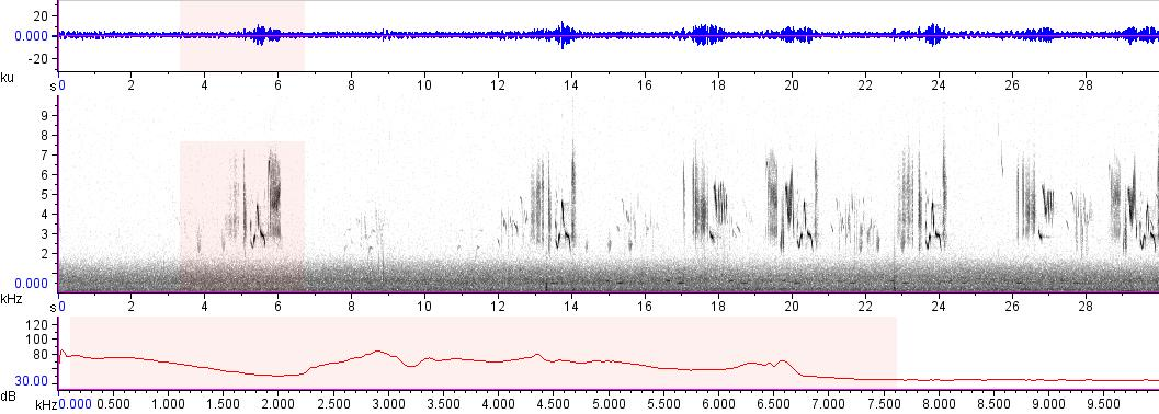 Sonogram of recording #AV 17183
