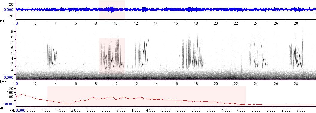 Sonogram of recording #AV 17184