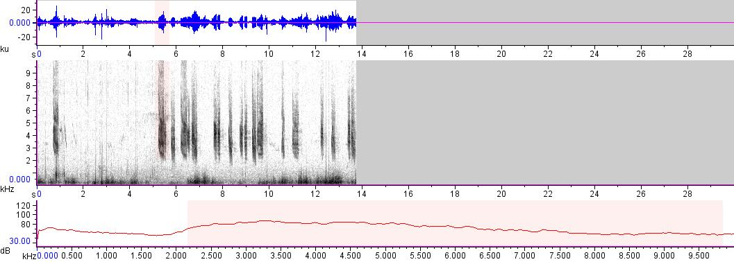 Sonogram of recording #AV 17187