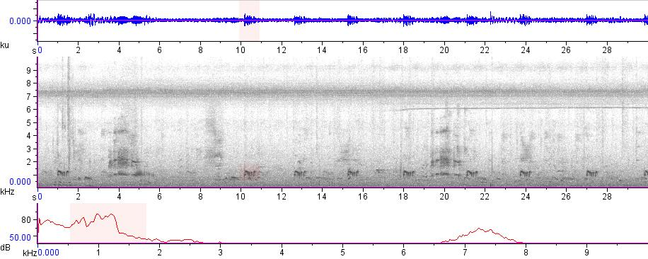 Sonogram of recording #AV 17213