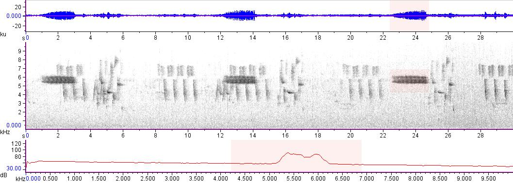 Sonogram of recording #AV 17236